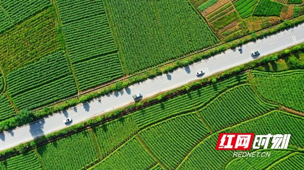 近年来,新田县抢抓乡村振兴的发展机遇,大力发展农业绿色可持续产业,种植蔬菜、水稻、烤烟、红薯等特色产品,促进农民增收致富。