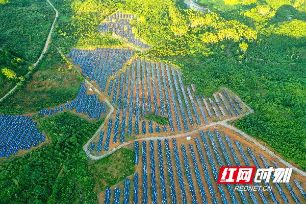 目前,全县已建成8个光伏发电站,总装机规模达到47.9兆瓦,电站建成运行使企业增效、百姓受益,巩固拓展脱贫攻坚成果同乡村振兴有效衔接。